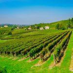 Repenser le post Covid-19: le voyage du trotteur italien