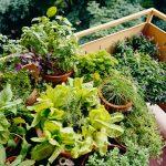 10 herbes insolites à avoir sur le balcon
