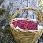 Les framboises des montagnes de Cimini.  Et deux recettes