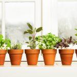 Comment conserver les herbes aromatiques pour l'hiver?