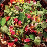 Recette Salade de capucine et de trèfle aux noisettes et graines de citrouille