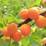 Quelle fraîcheur les fruits de saison de juillet !